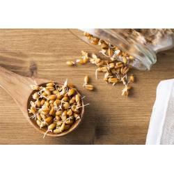 Пшеница для проращивания органическая Green Vitamin 500 г