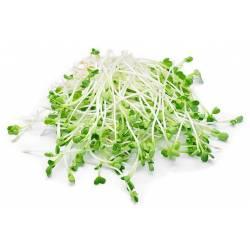 Семена микрозелени Агромакси 6 штук